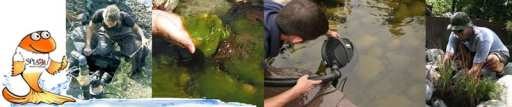 pond algae pond care pond service banner