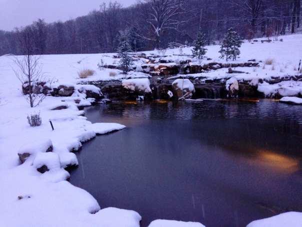 Winter koi
