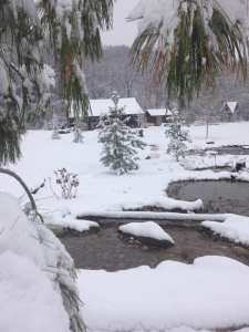 Pond Winter