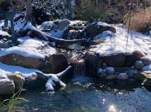 Winter Pond Fish Care