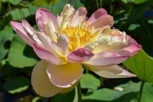 Mrs. PDS Lotus