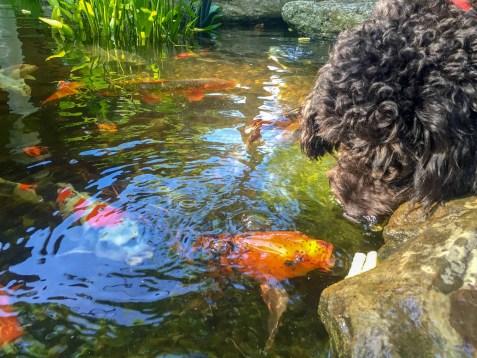 Splash Supply Company Ecosystem Pond
