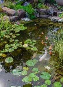 medium pond 2