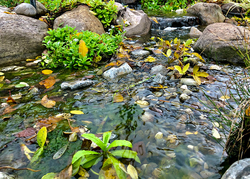 string algae low-res waterfall