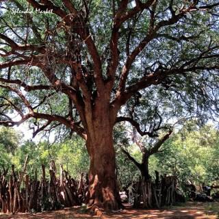 The Kgotla, Botswana…