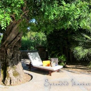 beneath the Carob tree…