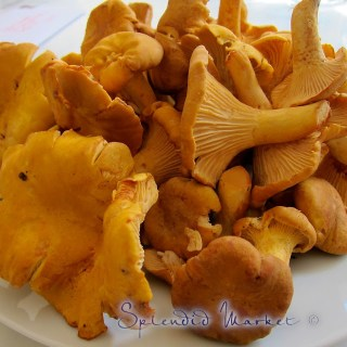 Chanterelle mushrooms…