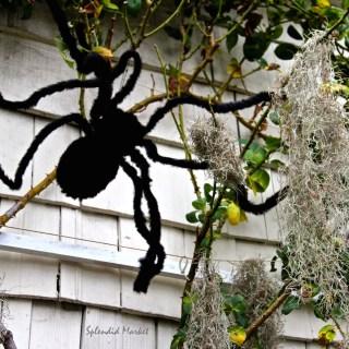 Spider Sagas…