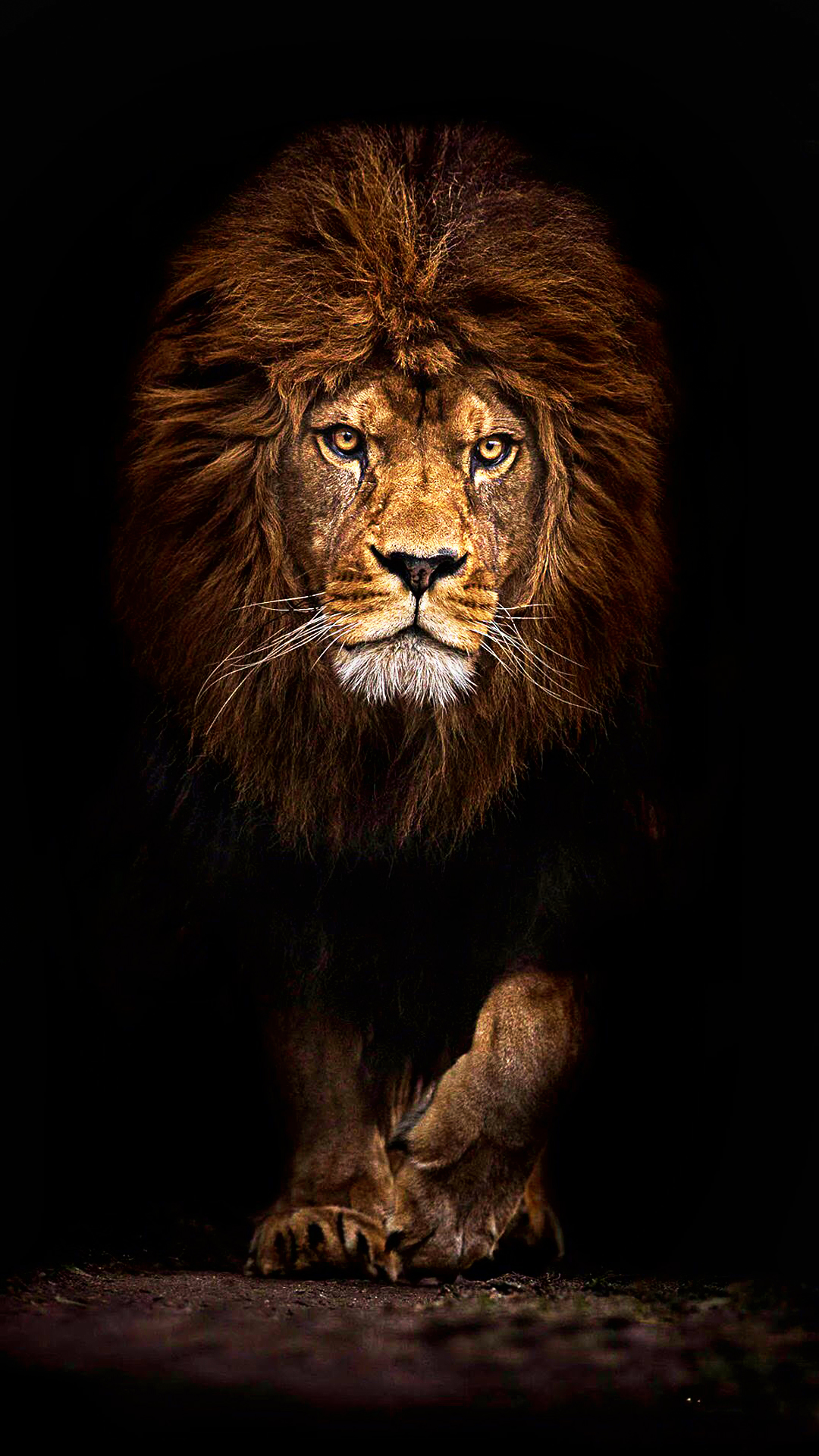 Lion Hd Wallpapers For Mobile Phones