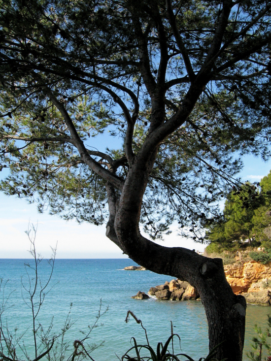 Crooked Mallorcan Tree