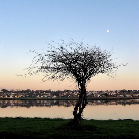 Tree, Water, Moon