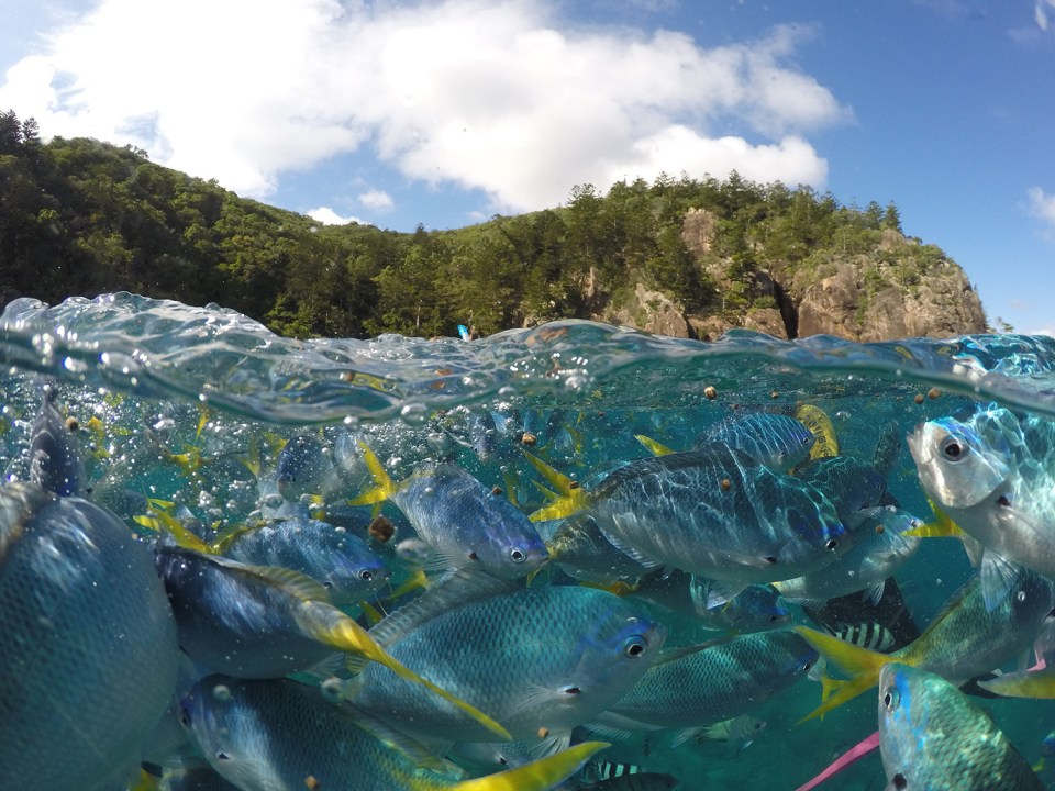 An over under photo of a shoal of fish