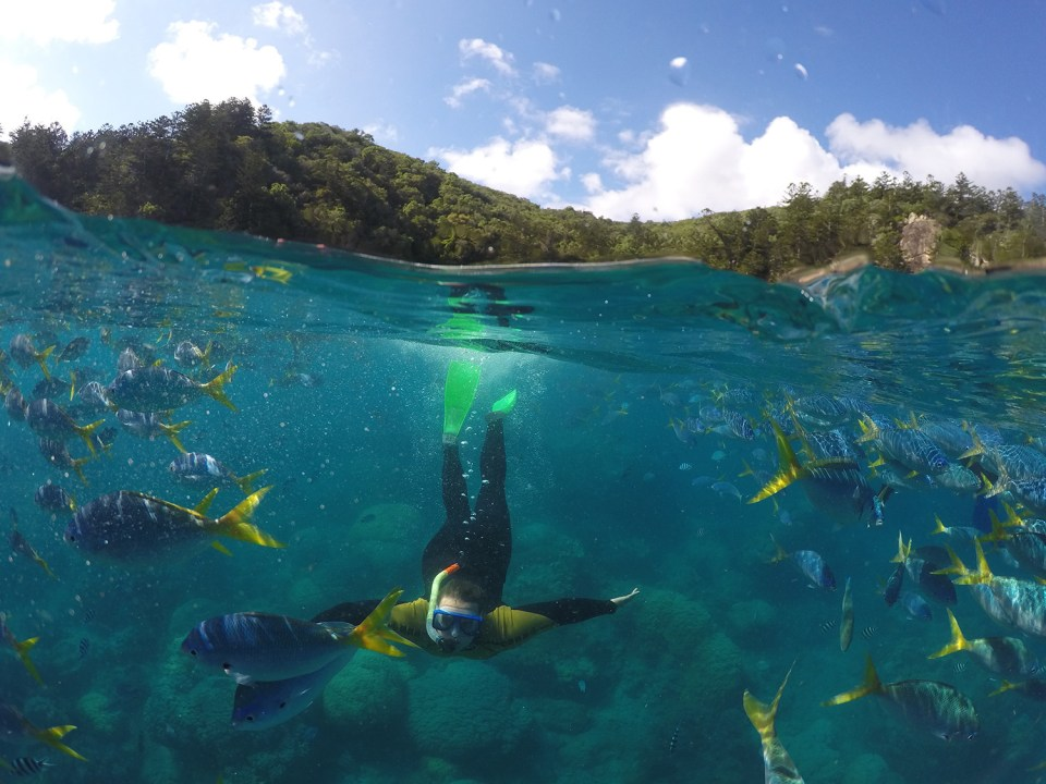 Man snorkeling next to an island.