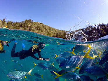 Snorkeling with the fishes in Australia