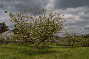 Testing exposure compensation on a tree in blossom - under exposed - much more moody