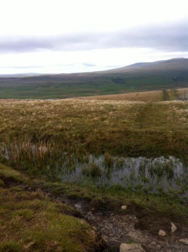 Yorkshire Three Peaks Challenge - Marshland... bog
