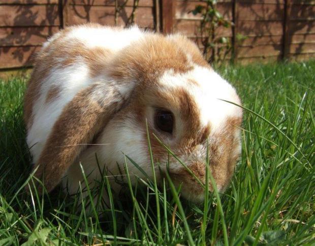 Ginger Eating Grass