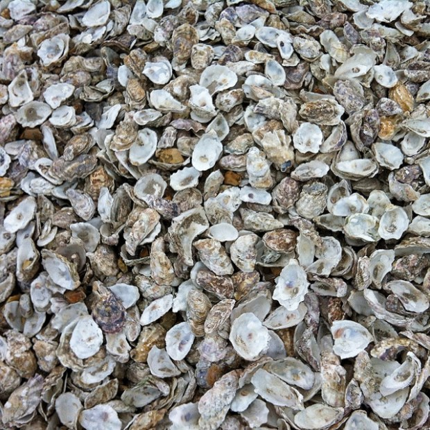 Discarded Oyster Shells - Zoe Homes