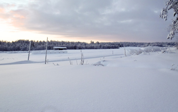 The view while Husky Sledding in Ruka, Finland
