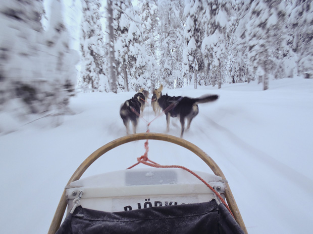 Huskies and Skidoos in Ruka, Finland