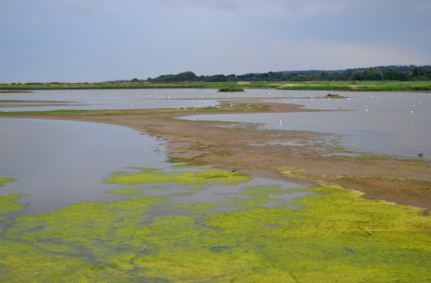 Road Trip to Norfolk - RSPB Titchwell Marsh