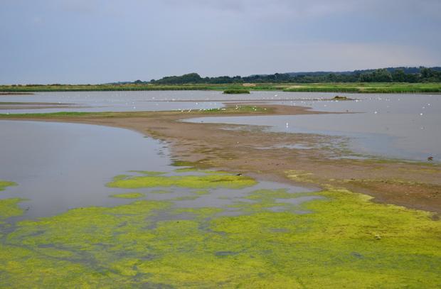 Road Trip to Norfolk - RSPB Titchwell Marsh