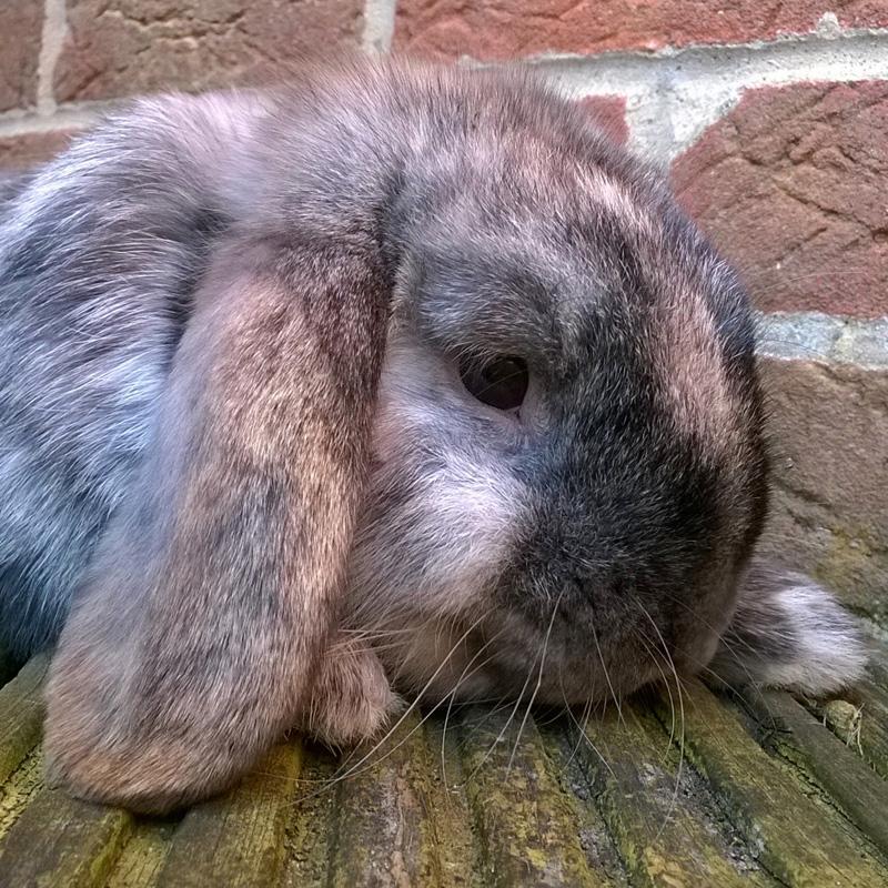 Chip Bunny taken on the Lumia 1320