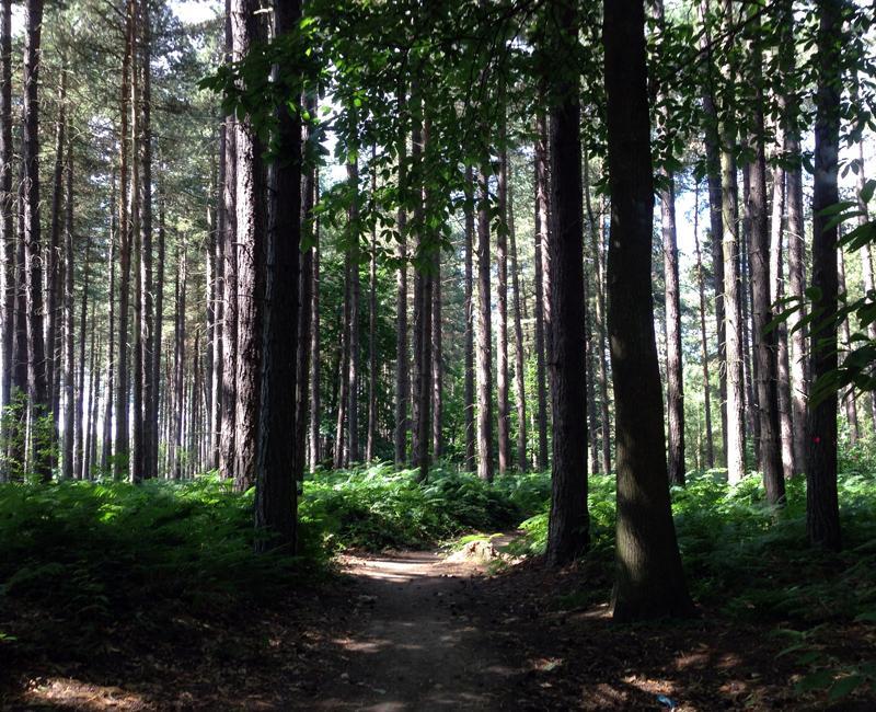 Sherwood Pines Forest Mark - Mountain Bike Trail