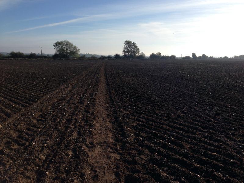 Walking towards Potterhamworth