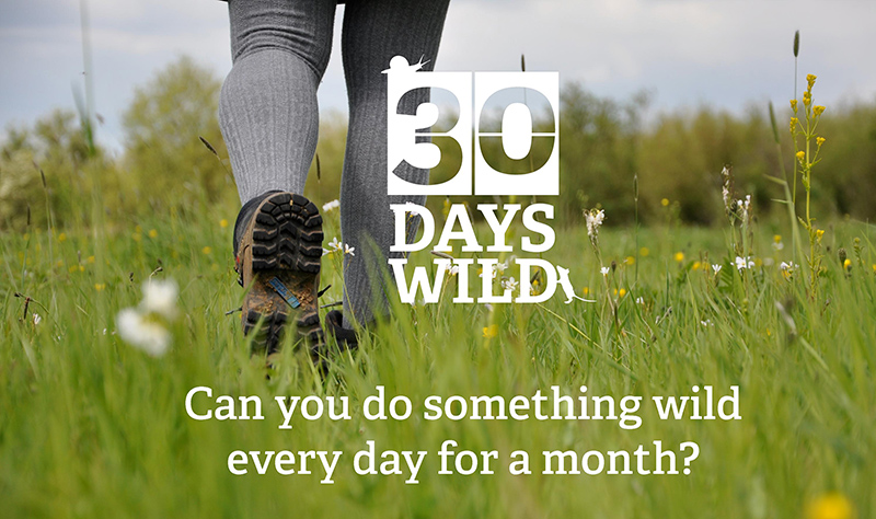 30 Days Wild - The Wildlife Trusts