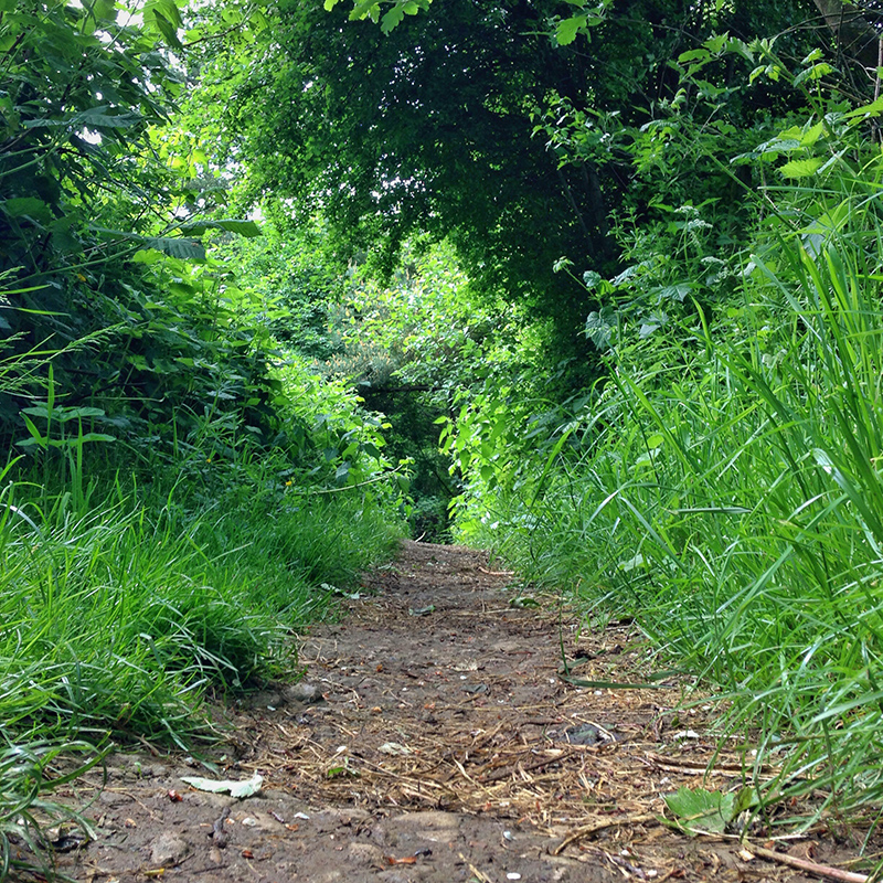 30DaysWild - Walking the Local Trails