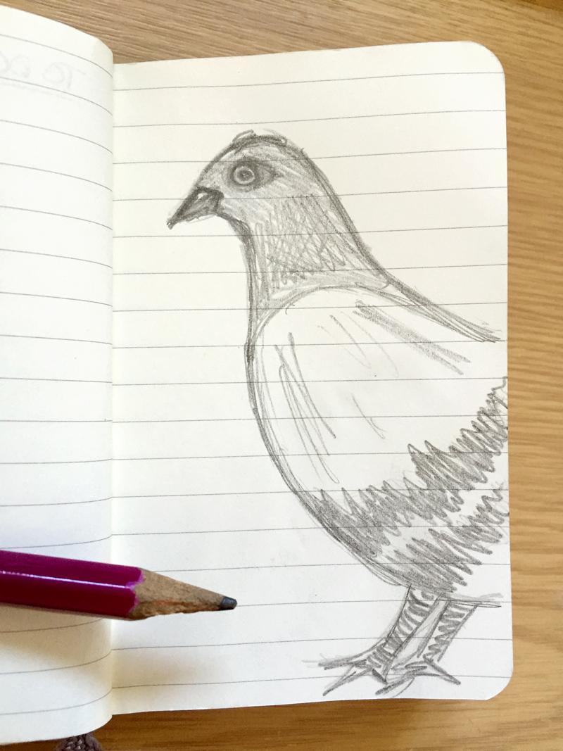 30DaysWild - Pigeon Doodle