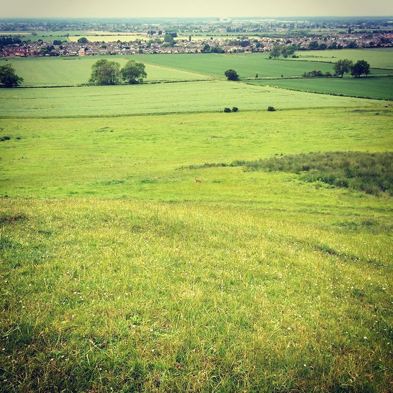 30DaysWild - Hare on the Ridge