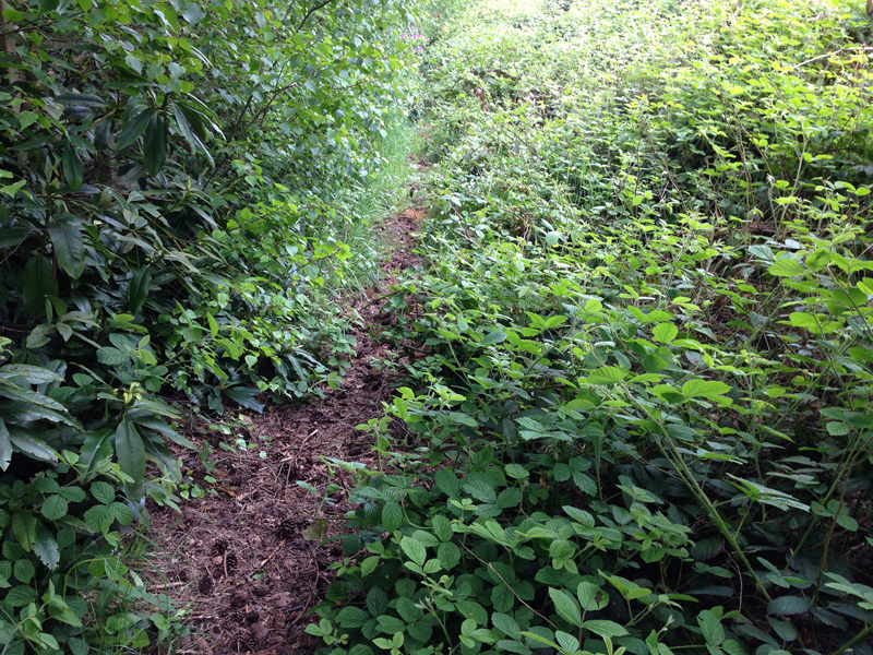 Walking in Lincolnshire - Overgrown Path