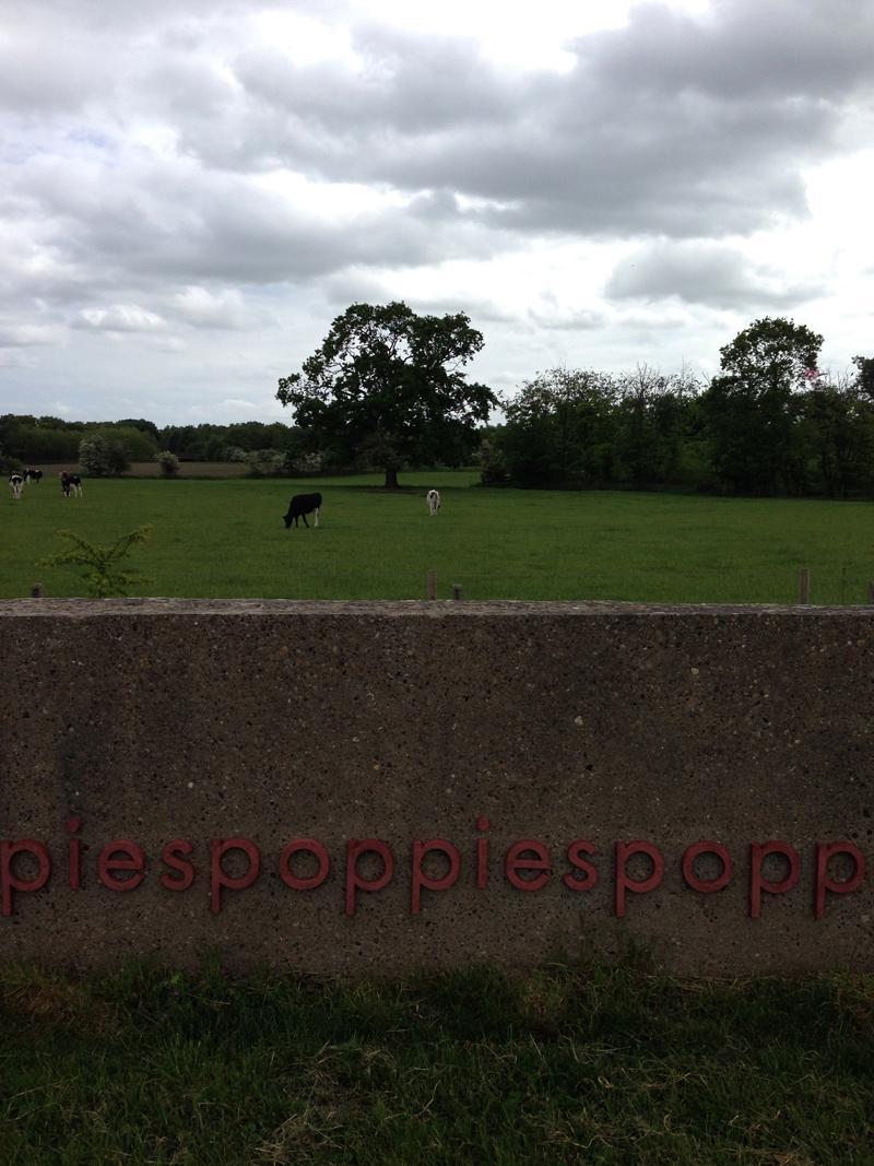 Walking in Lincolnshire - Poppies Skellingthorpe
