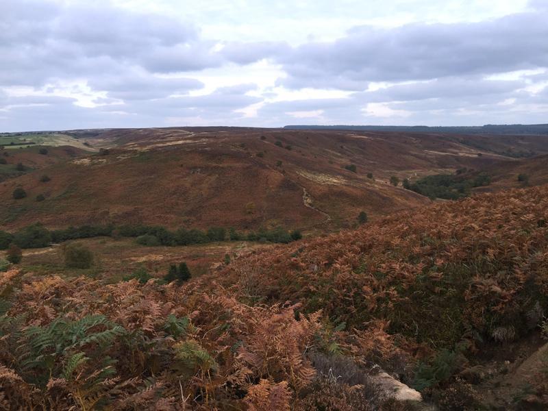 Lyke Wake Walk - More Moorland!
