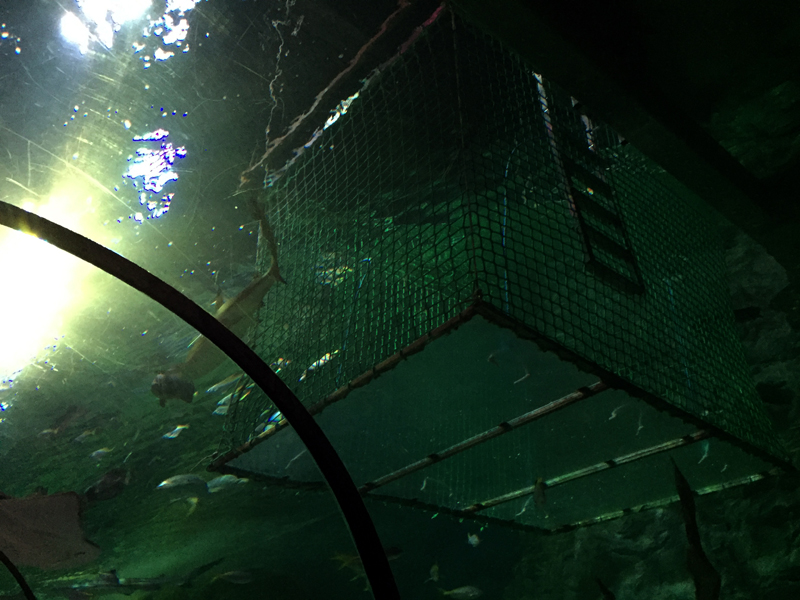 Snorkelling with Sharks at SEA LIFE Blackpool