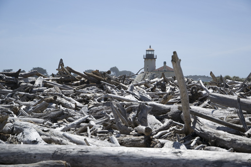 Zartusacan - Lighthouse and Driftwood