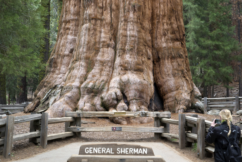 Zartusacan - The General Sherman Tree, Sequoia National Park