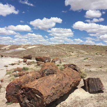 Stone Trees in the Petrified Forest
