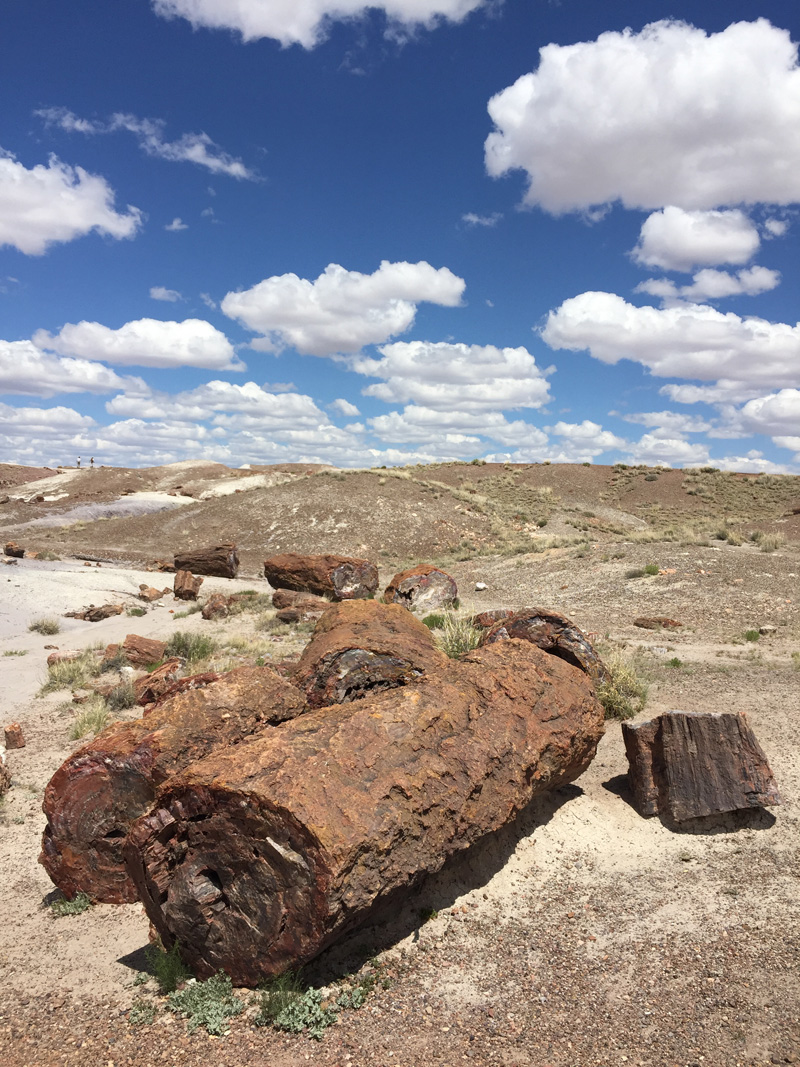 Zartusacan - The Petrified Forest