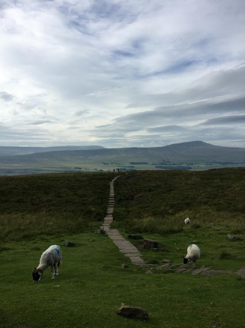 Yorkshire 3 Peaks - Looking back at Whernside from Ingleborough
