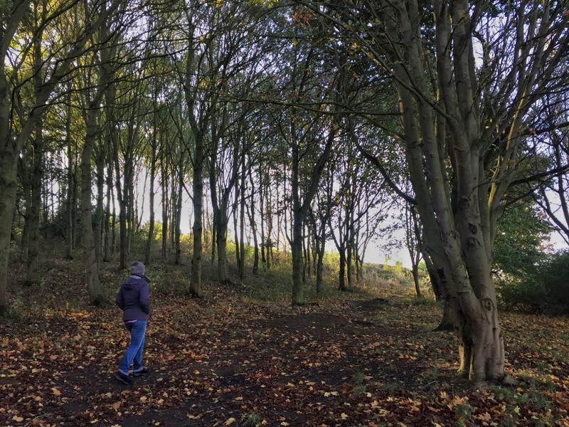 One Hour Outside - Local Woodland Walk
