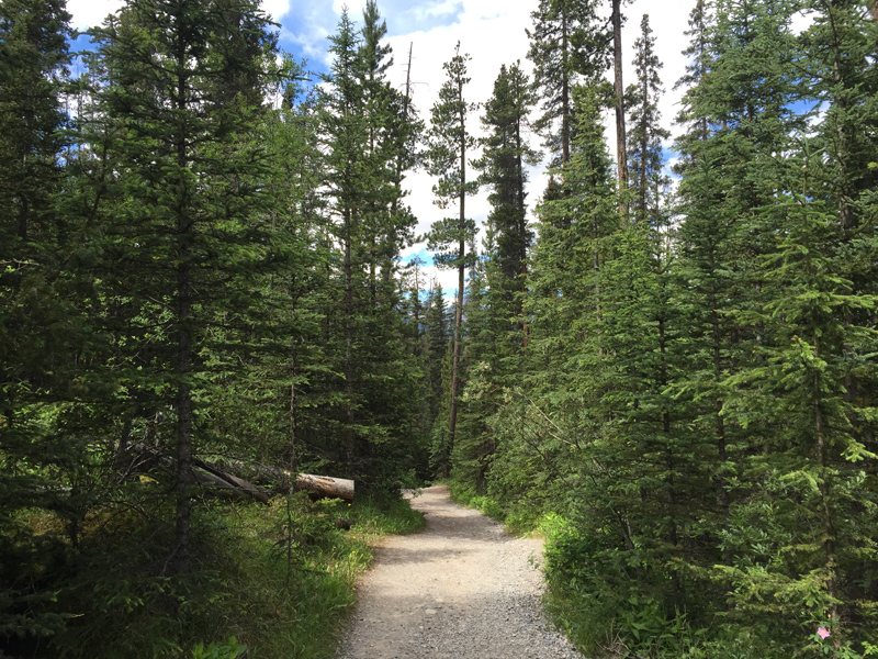 Walking to Mistaya Canyon