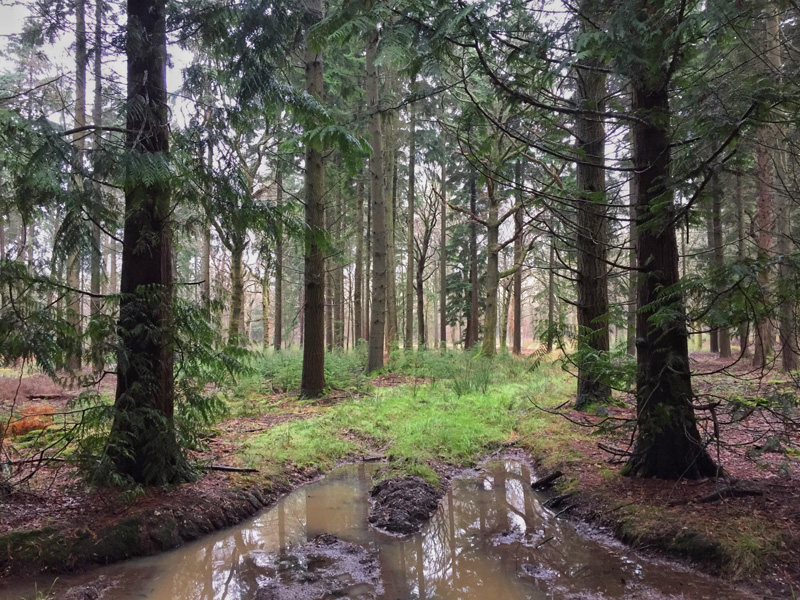 Woodland in the New Forest, Splodz Blogz