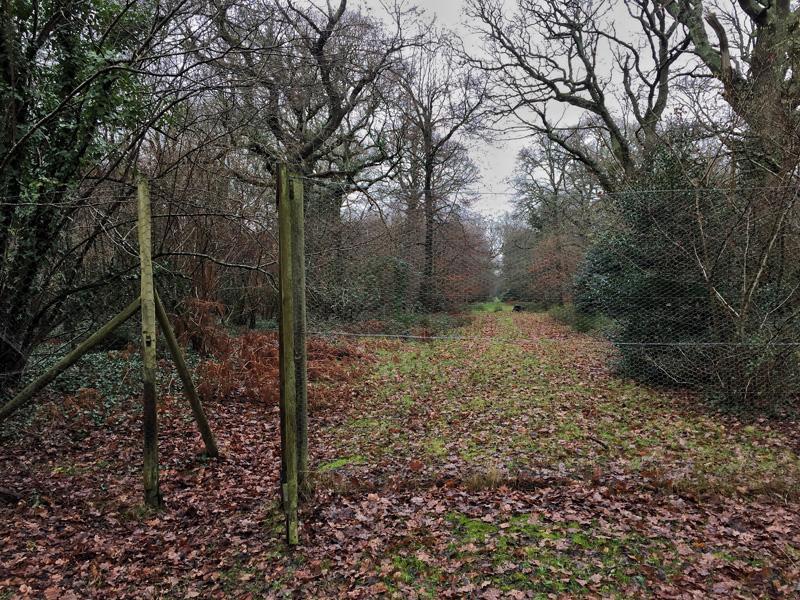 Fences in Ashen Wood, Splodz Blogz