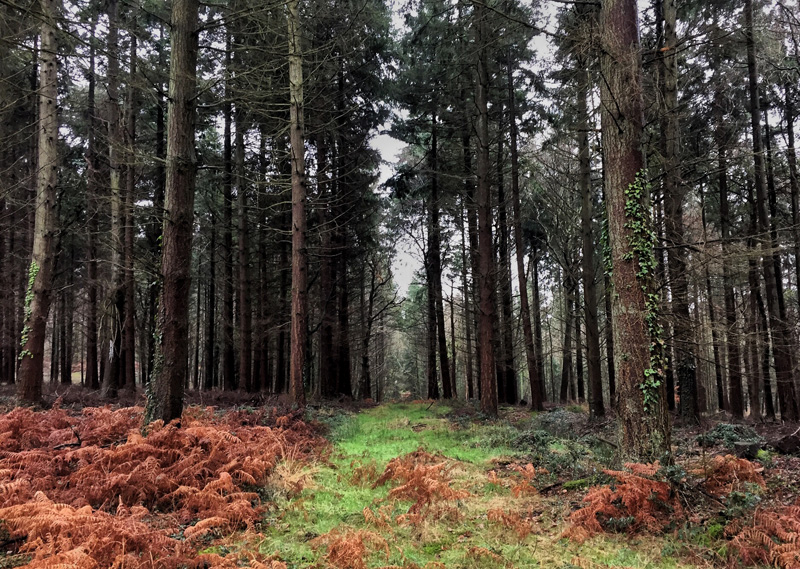 Tyler's Copse, New Forest, Splodz Blogz