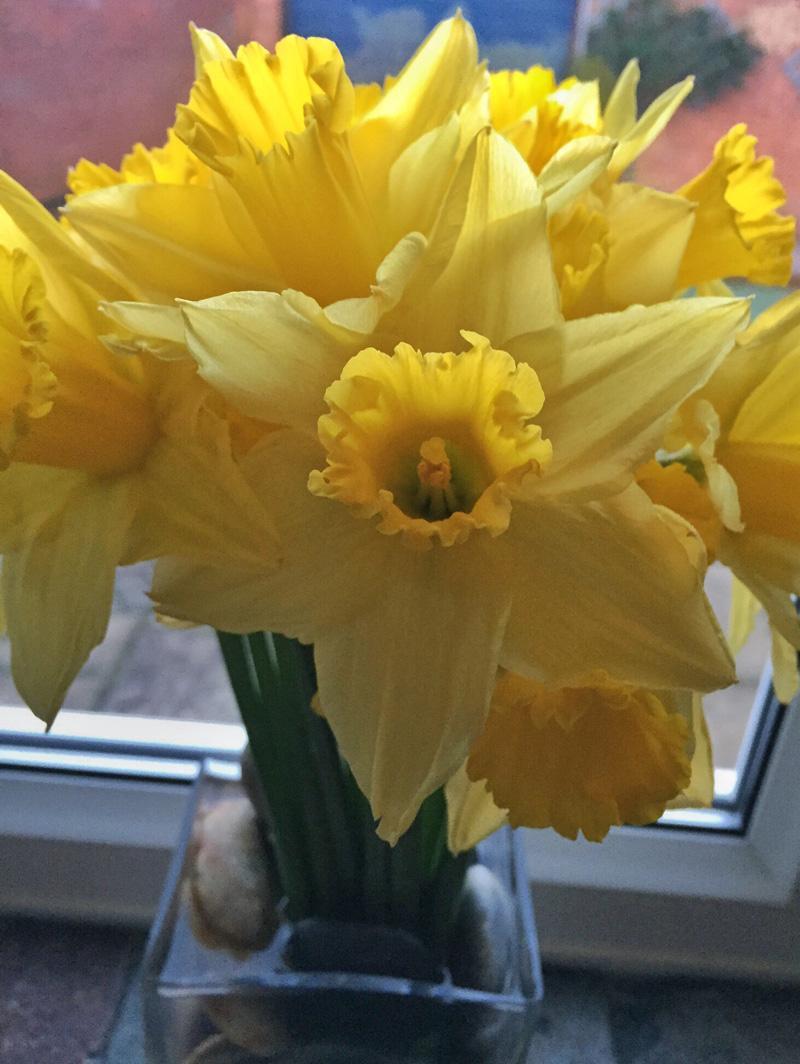 One Hour Outside February - Daffodils