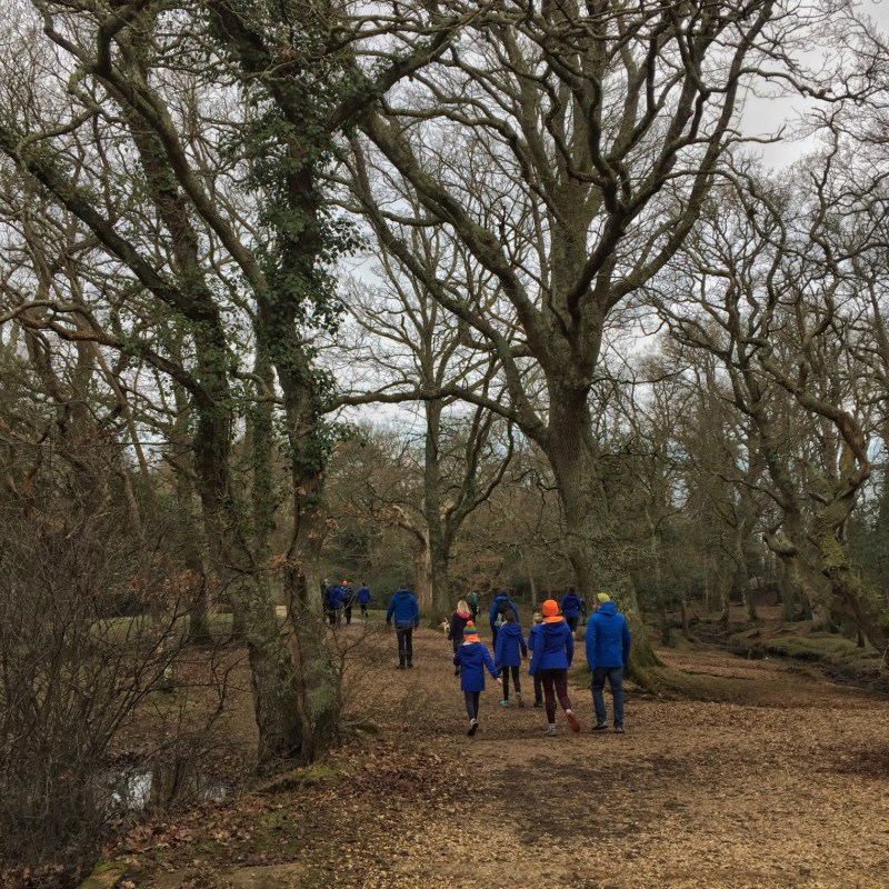 Walking in the New Forest, Splodz Blogz