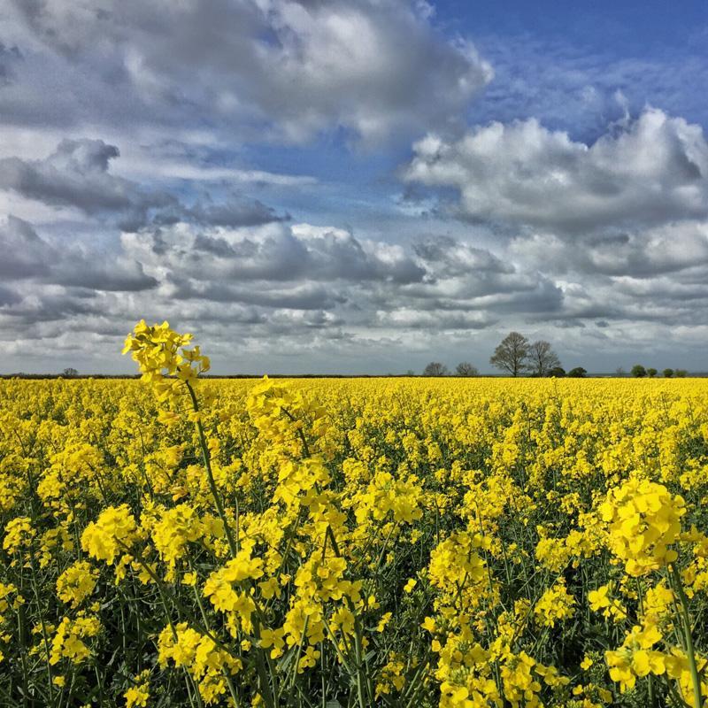 Splodz Blogz   My Nature, Lincolnshire Field